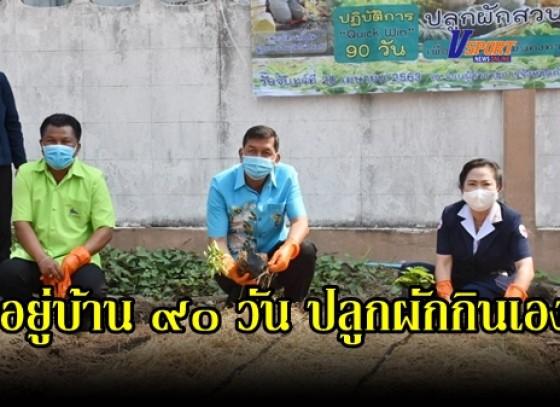 กำแพงเพชร- นายอำเภอเมือง กล้วยไข่ ชวนปลูกผักสวนครัว อยู่บ้าน 90 วัน ร่วมกันปลูกผักสวนครัว เพื่อสร้างความมั่นคงทางอาหาร