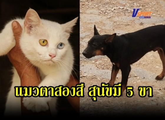 กำแพงเพชร- แปลกเจอสุนัข 5 ขา แมวตาสองสี เดิน-วิ่งได้ปกติ ก่อนหวยออกเข้าฝันเจ้าของ ให้โชคเเทบทุกงวด เชื่อเลี้ยงไว้ให้คุณดี (คลิป)